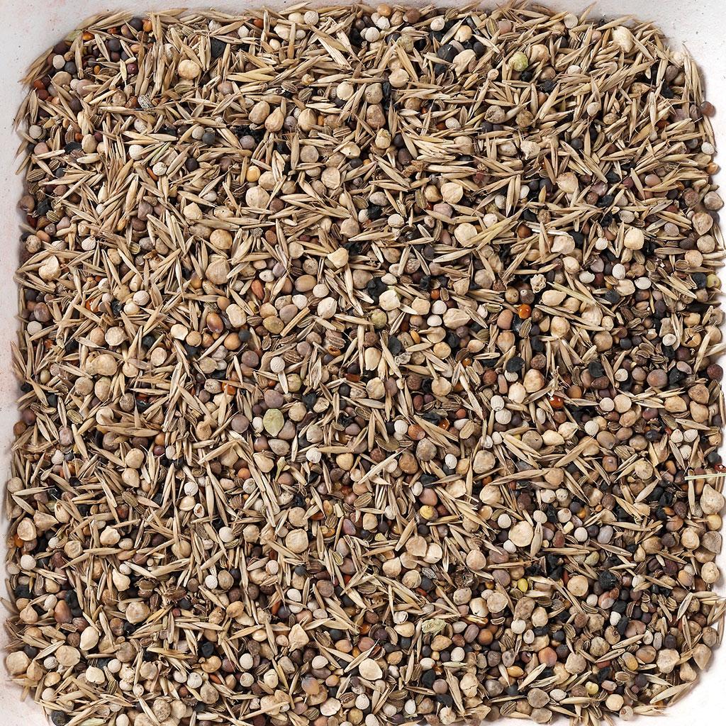 купить семена белого клевера в г липецке